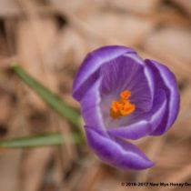 cropped-flowerpurple.jpg