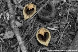 Woody Hearts